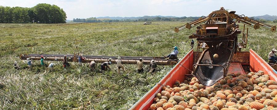 banner-agricultural-ph.jpg